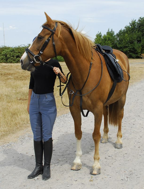 Windsor Equestrain Leather Running Martingale