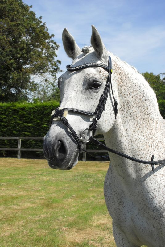 Rhinegold Italian Leather Anaromical Bridle With Mexican Noseband