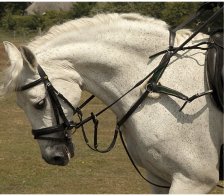 Rhinegold 5 Point Breastplate