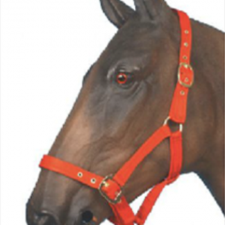 Eclipse Padded Release Headcollar